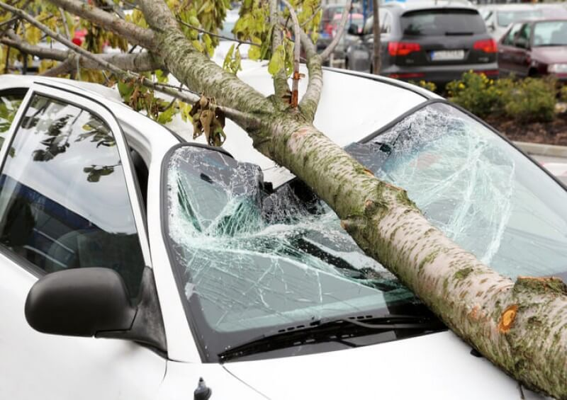 car hit by tree