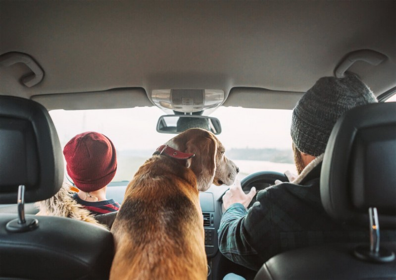 Dog in the car with father and son