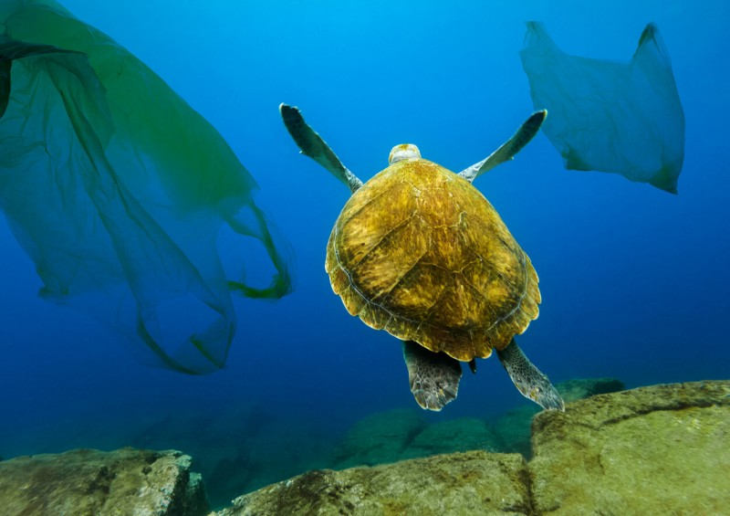 Turtle swimming next to plastic bags in the ocean